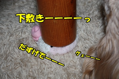 009_20110211115314.jpg