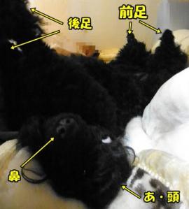 010_20110227152944.jpg