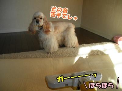 010_20110306210736.jpg