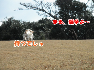 013_20110130150525.jpg