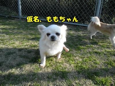 022_20110306120715.jpg
