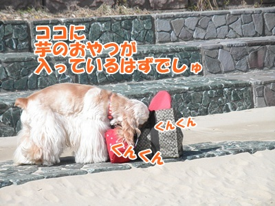 028_20110222224942.jpg