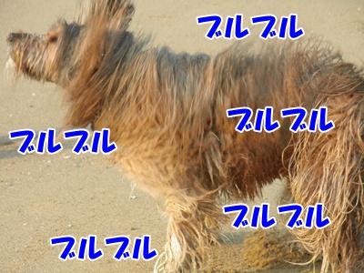 035_20110207225458.jpg