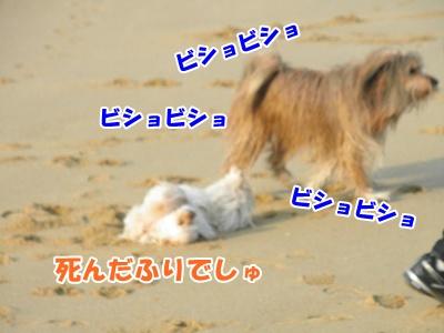 040_20110207225554.jpg