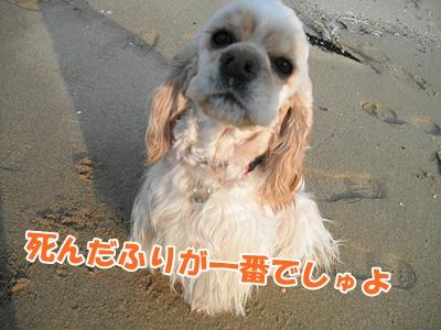 044_20110207225554.jpg