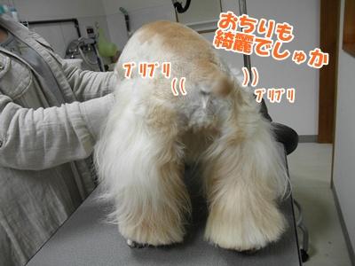 059_20110227124456.jpg