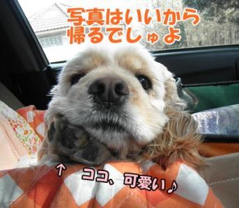 064_20110130150825.jpg