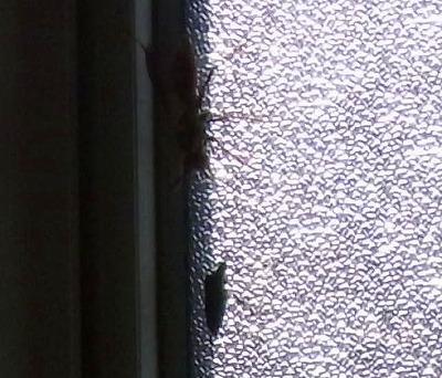 冬篭りの虫たち2