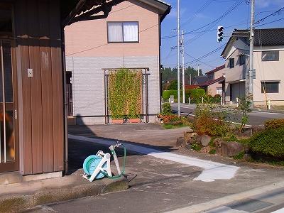 2011秋のグリーンカーテン