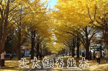 2007/11/4紅葉-1