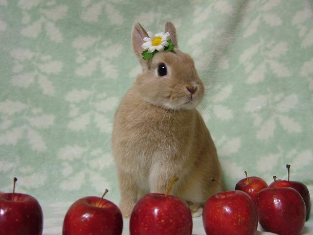 ぴかぴか姫リンゴと♪