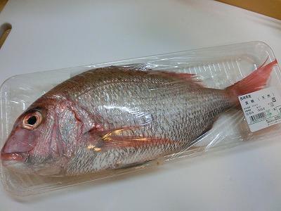 s-お鯛さん (1)