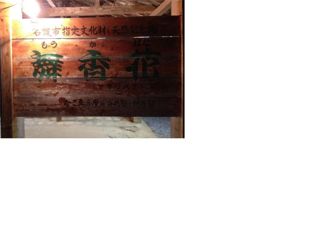 20120701舞香花(縮小)