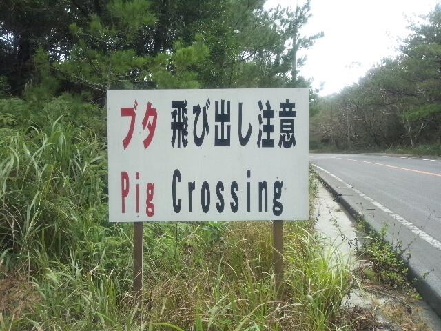 DSC_0371豚注意JPG