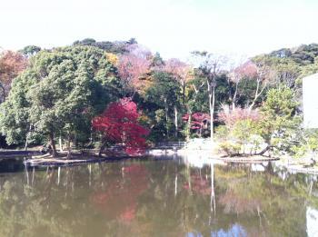 鎌倉八幡宮の池