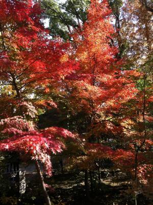これも八幡宮の紅葉