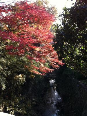 瑞泉寺~鎌倉宮へ抜ける道の途中で