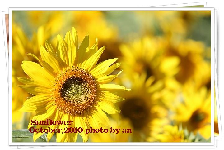 20101027_7749.jpg