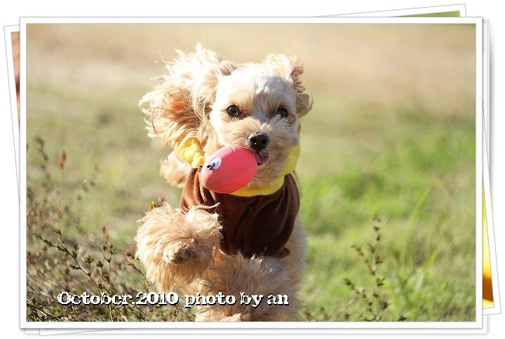 20101027_7938.jpg