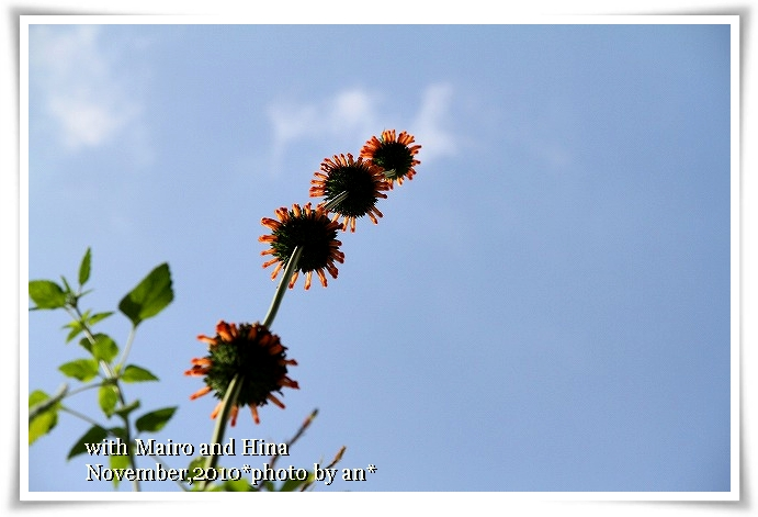 20101106_0482.jpg