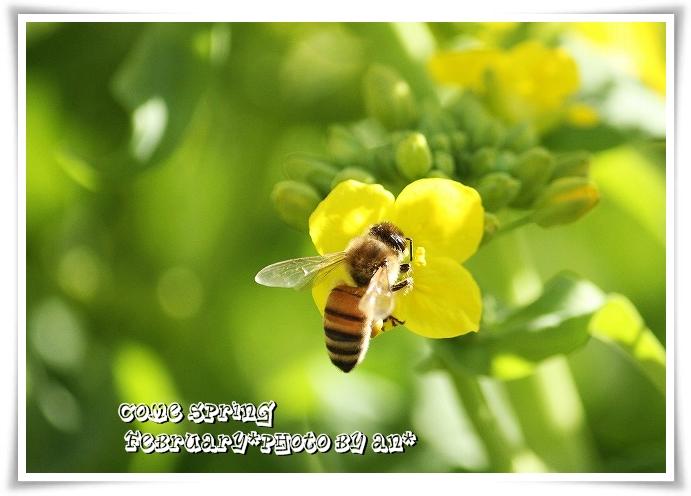 20110221_0381.jpg