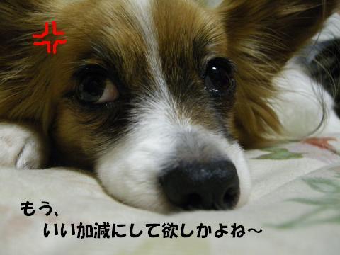 IMGP0018_convert_20120301140616.jpg