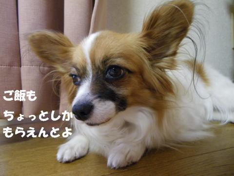 IMGP0484_convert_20120516125119.jpg