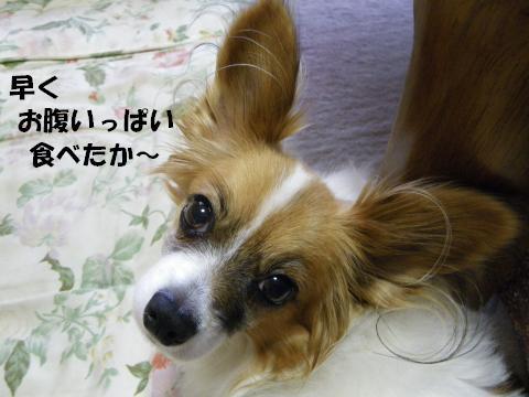 IMGP0488_convert_20120516125202.jpg
