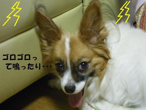 IMGP0671_convert_20120719135309.jpg