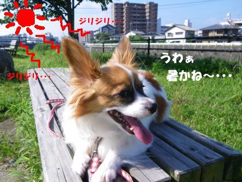 IMGP0709_convert_20120727154152.jpg