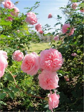kana_garden