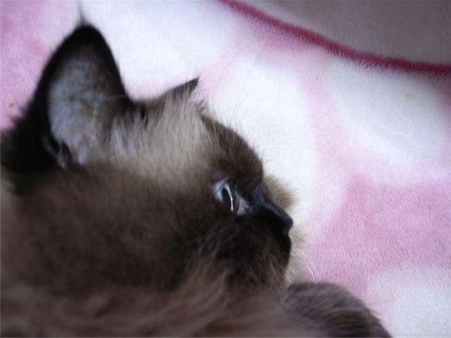 寝みちゅ4