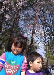 2011-4-16-1.jpg