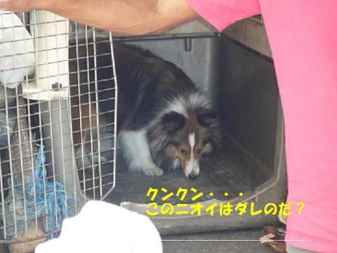 018繝壹う繝ウ繝・convert_20100723132811