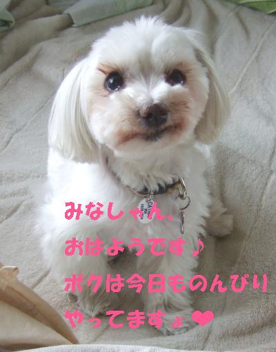 2010_06090002.jpg