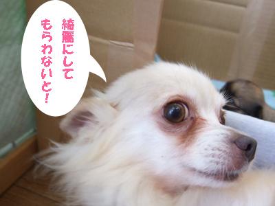 2010_06110022.jpg