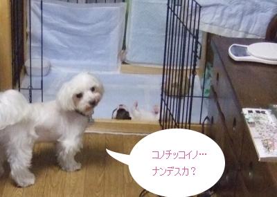 2010_06130054-1.jpg
