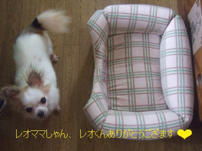 2010_10040003.jpg