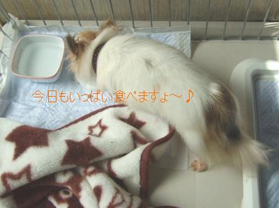 2010_10080006.jpg