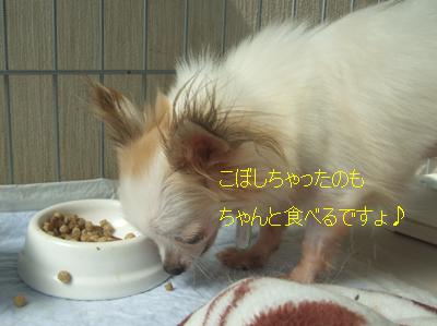 2010_10080011.jpg