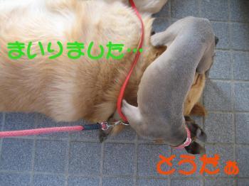 1179357076198407_convert_20100616220317.jpg
