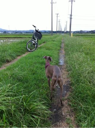 iphone_20101001003422.jpg