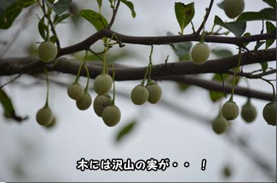 DSC_0066-2 (2)