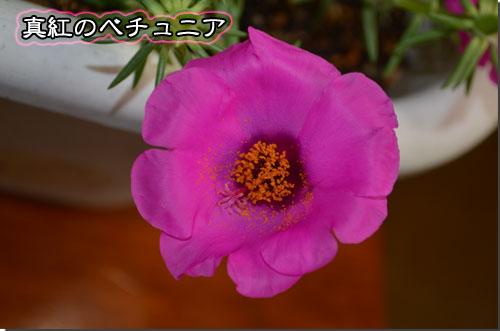 DSC_0302のコピー
