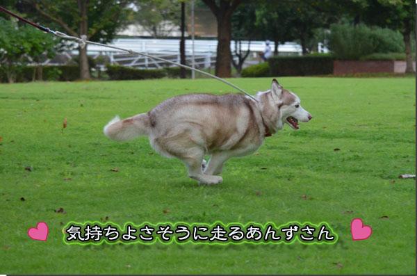 DSC_0118-21.jpg