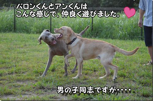 DSC_0475-2.jpg