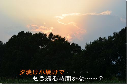 DSC_0533-2.jpg
