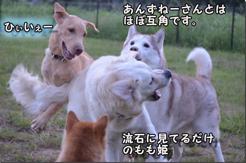 DSC_0565-2.jpg
