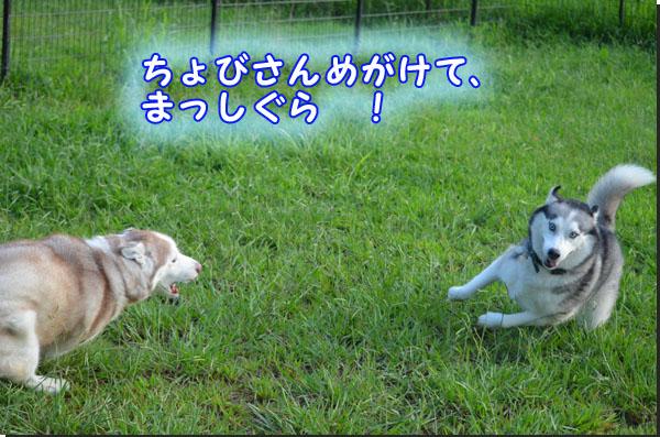 DSC_0595.jpg