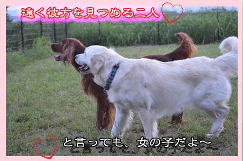 DSC_0612-2.jpg